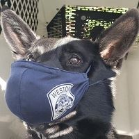 K9 Knox wears a face mask