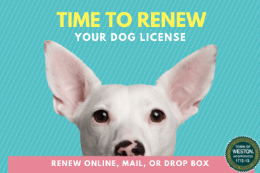 time to renew dog license